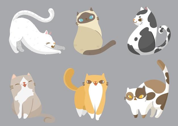 Set di gatti in diverse pose.