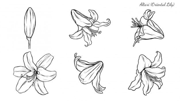 Set di giglio