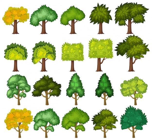 Set di grandi alberi verdi