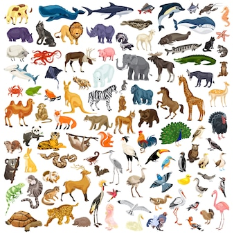 Set di icone di animali