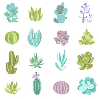 Set di icone di cactus