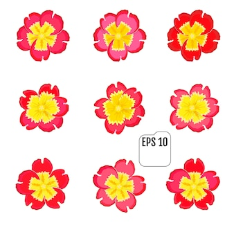 Set di icone floreali di primavera primula fiore.