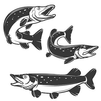 Set di icone luccio su sfondo bianco. elementi per logo, etichetta, emblema, segno, marchio.