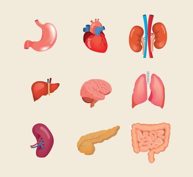 Set di illustrazione di organi del fumetto umano realistico isolato