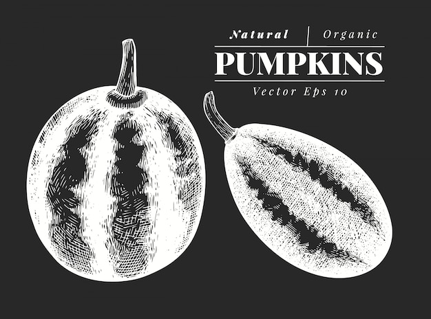 Set di illustrazione di zucca. illustrazione di verdure di vettore disegnato a mano sul bordo di gesso. stile inciso