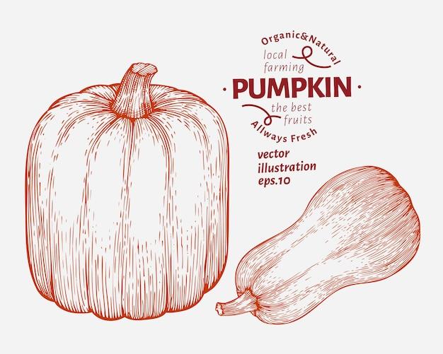 Set di illustrazione di zucca. illustrazione disegnata a mano della verdura di vettore. halloween o il giorno del ringraziamento in stile inciso