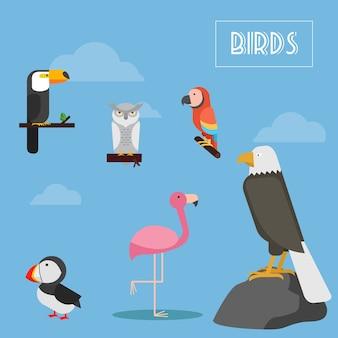 Set di illustrazioni vettoriali di uccelli