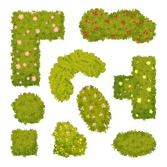 Set di immagini di cespugli ornamentali