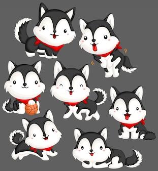 Set di immagini husky