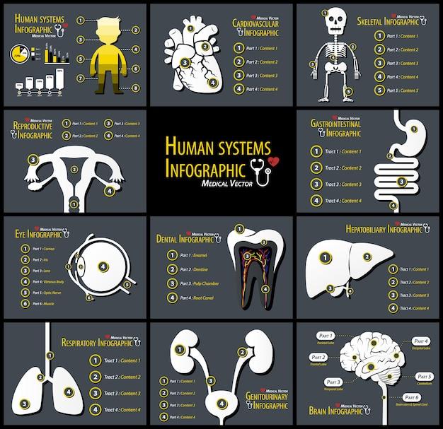 Set di infographics di sistemi umani