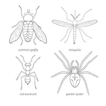 Set di insetti