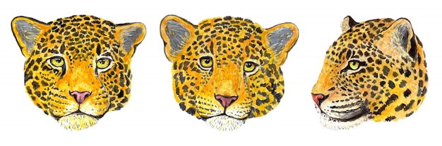 Set di leopardo realistico dell'acquerello