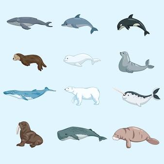 Set di mammiferi animali marini