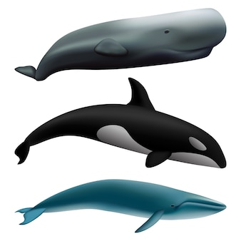 Set di mockup di pesce balena blu racconto