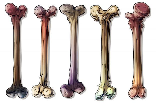 Set di ossa umane colorate grafiche dettagliate