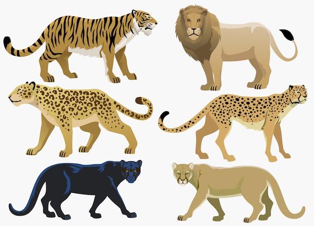 Set di pacchi di grandi felini