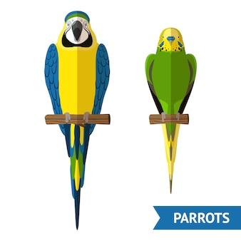 Set di pappagalli seduti