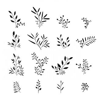 Set di pianta monocromatica