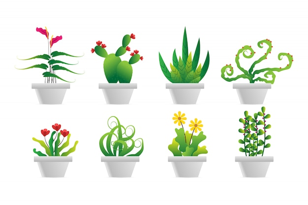 Set di pianta verde in vaso bianco
