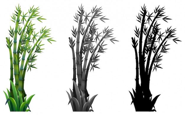 Set di piante di bambù