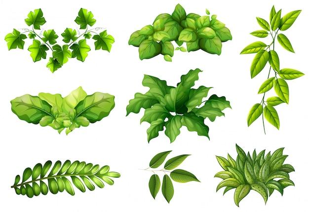 Set di piante naturali