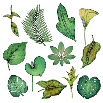 Set di piante tropicali disegnati a mano verde