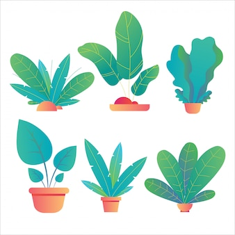 Set di piante