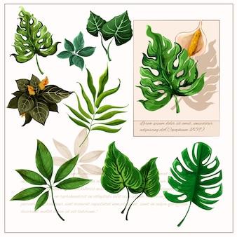 Set di pittogrammi di foglie tropicali verde