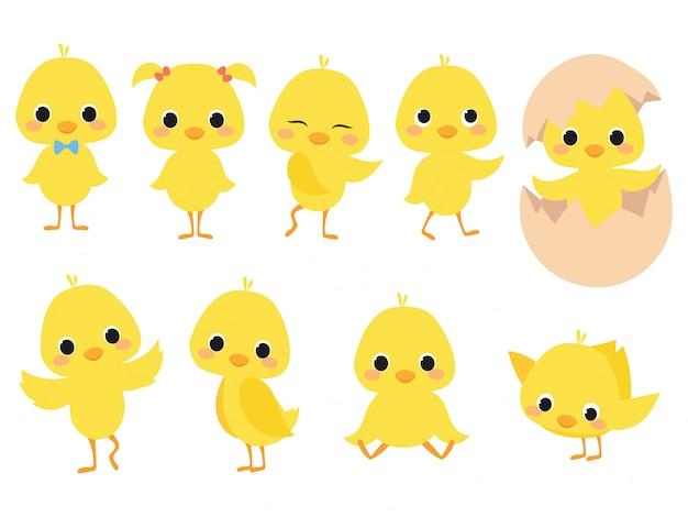 Set di pulcini di cartone animato. una collezione di simpatici pulcini gialli. illustrazione di piccoli polli per bambini.