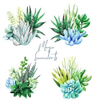 Set di quattro bouquet di piante succulente dell'acquerello brillante