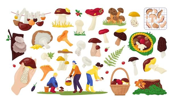Set di raccolta di funghi commestibili in natura, per il cibo su bianco illustrazione. collezionisti di funghi autunnali nella foresta.