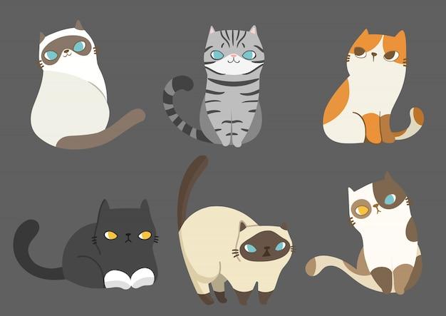 Set di razze di gatti diversi in diverse pose.