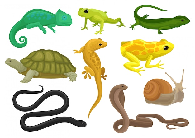 Set di rettili e anfibi, camaleonte, rana, tartaruga, lucertola, geco, tritone illustrazione su sfondo bianco
