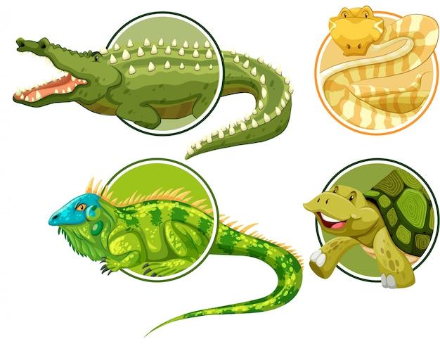 Set di rettili sul modello di adesivo cerchio