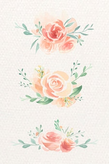 Set di rose ad acquerelli