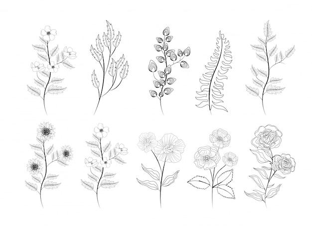 Set di rose esotiche e piante di fiori con foglie