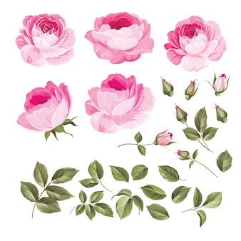 Set di rose vintage.