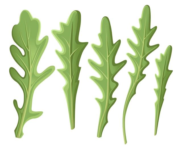 Set di rucola rucola, foglie verdi fresche di rucola e contorni su sfondo bianco. illustrazione disegnata a mano. pagina del sito web e elemento dell'app mobile.