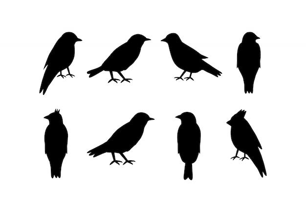 Set di sagome di uccelli su bianco