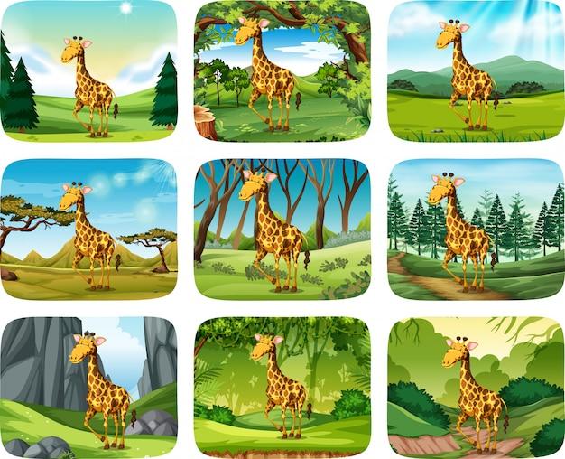 Set di scene di giraffa