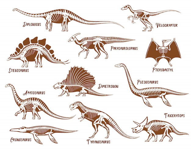 Set di scheletri di dinosauri