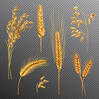 Set di sfondo trasparente cereali realistici
