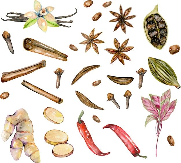 Set di spezie ad acquerelli