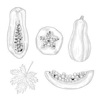 Set di stile disegnato a mano di papaia. papaia intera, mezza e tagliata. frutti estivi disegnati a mano pawpaw.