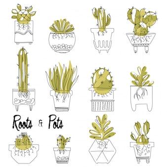 Set di succulente e cactus con radici in vaso.