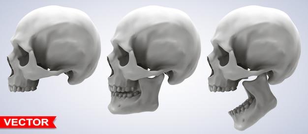 Set di teschi umani fotorealistici grafici dettagliati