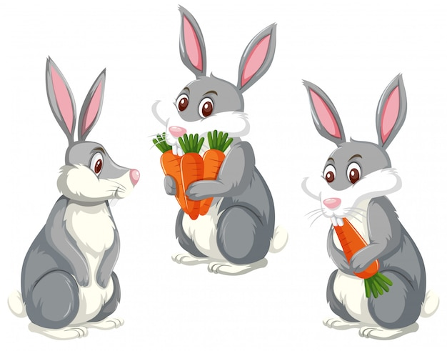 Set di tre conigli carini