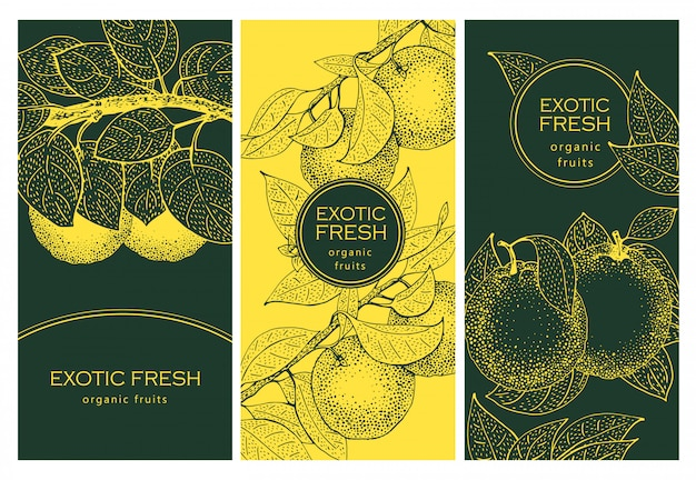 Set di tre etichette con ramo di fiori d'arancio e frutti. ottimo per alimenti tradizionali, biologici, medicinali, profumi, cucina o giardinaggio. retro