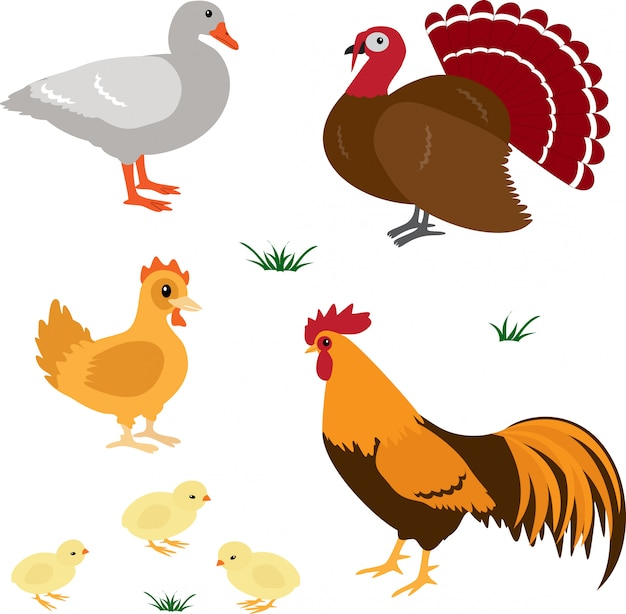 Set di uccelli di fattoria