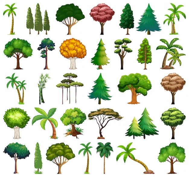 Set di varietà di piante e alberi